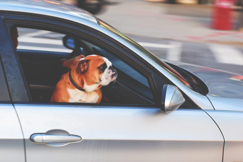 Hund sitzt in einem Auto