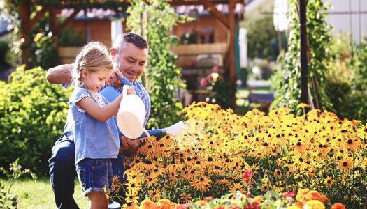 Gartenplanung für Anfänger