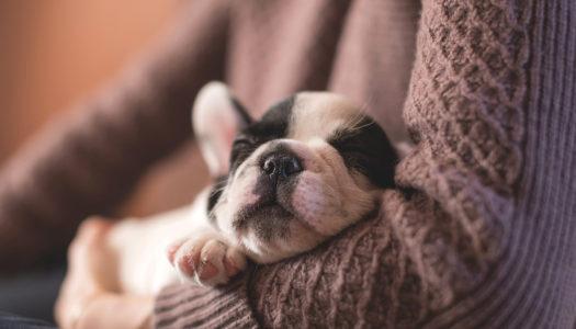Das richtige Haustier für eine Wohnung