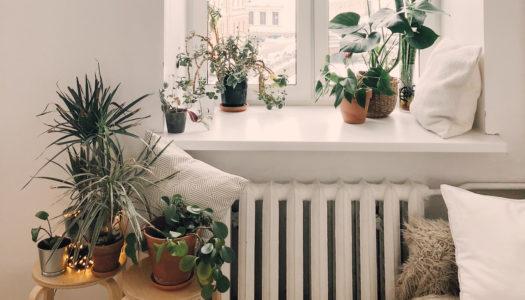 Pflanzen in Abwesenheit gießen