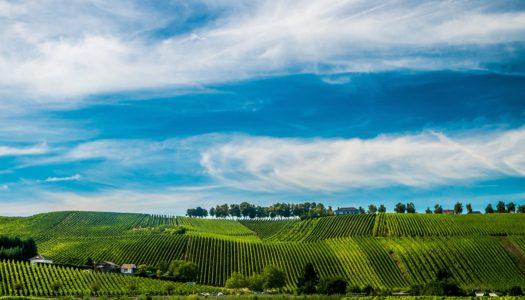 Leben in Remich, im Herzen der Weinregion